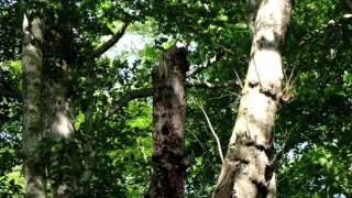 getlinkyoutube.com-自然の音景色L 森の春  5(長時間) Nature Sound