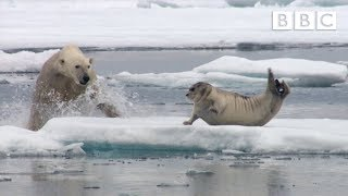 getlinkyoutube.com-Hungry polar bear surprises a seal - The Hunt: Episode 2 Preview - BBC One