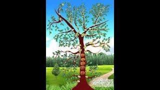 getlinkyoutube.com-شجرة أنساب العرب أحمد الدعيج mp3
