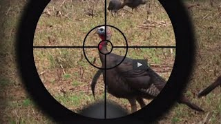 getlinkyoutube.com-Turkey Hunting Tips: The Best Turkey Call