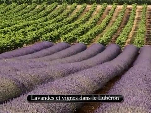 Les Routes de la Lavande, toute la lavande de la Provence aux Alpes