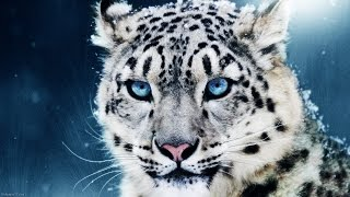 getlinkyoutube.com-Awesome Animals HD 1080p & 3D