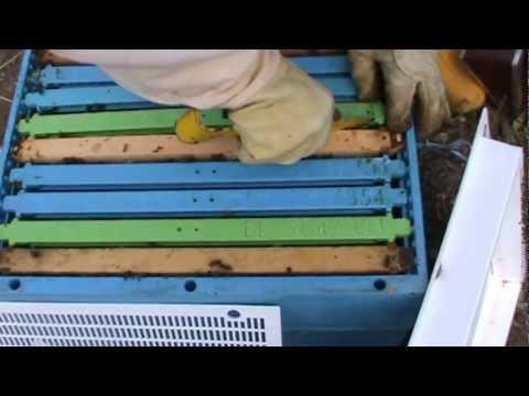 Μελισσοκομία Video 2_3.MPG