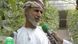 getlinkyoutube.com-الزراعة المائية في البيوت المحمية - عُمان