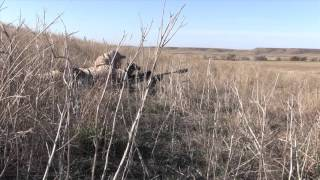 getlinkyoutube.com-Coyote Hunting, 5 Coyotes!!!:  CRPH -The Fantastic 5