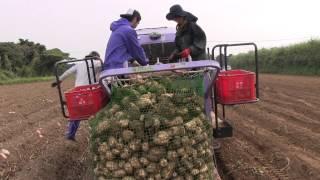 種子島の農業:さつまいもの収穫(ハーベスタ)