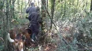 getlinkyoutube.com-Fox hunting
