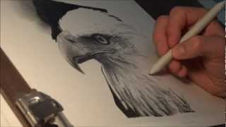 "getlinkyoutube.com-Speed Drawing - ""The Eagle"" - HD"