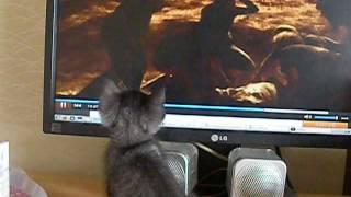 getlinkyoutube.com-子猫がホラー映画見ると……?