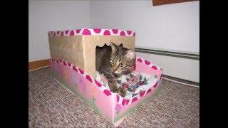 getlinkyoutube.com-tutorial manualidad como hacer una casa /cama para mascota(gato)