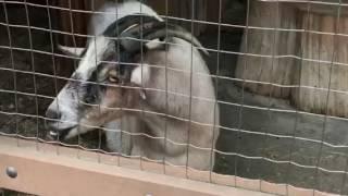 Prospect Park Zoo ....by Taj and Moulouk