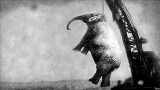 getlinkyoutube.com-إعدام الفيلة ماري شنقاً - قصة أغرب من الخيال !