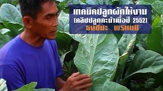 getlinkyoutube.com-เทคนิคปลูกผักให้งาม-คลิปปลูกคะน้าเมื่อปี 2552 โดยธงชนะ พรหมมิ