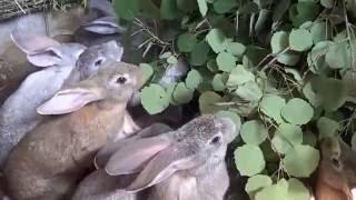 getlinkyoutube.com-Кролики в яме часть 7 Иркутск 3 июля 2016
