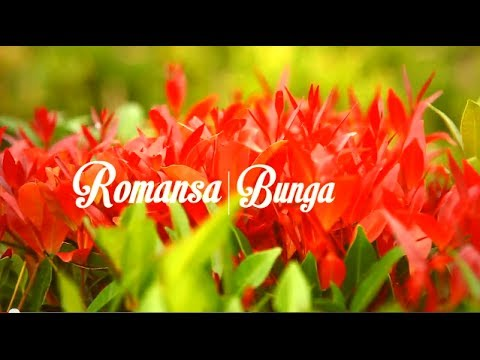 FASHION VIDEO | ROMANSA BUNGA