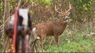 getlinkyoutube.com-Bowhunting Deer: Boom or Bust 2015 Deer Hunt
