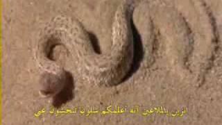 getlinkyoutube.com-ثعبان الصحراء