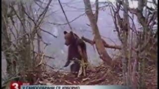 getlinkyoutube.com-Niedźwiedź zabija kobietę, krokodyl zabija turystę, pit bull zabija mężczyznę i wiele więcej