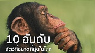 getlinkyoutube.com-10 อันดับสัตว์ที่ฉลาดที่สุดในโลก