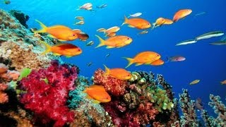 getlinkyoutube.com-Great Barrier Reef - La grande barrière de corail - Wielka rafa koralowa - Australia