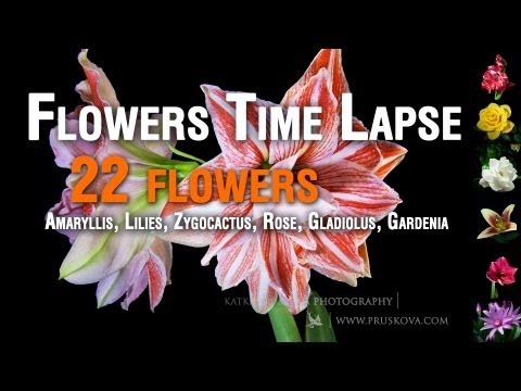 Flowers Time Lapse HD (22 flowers)