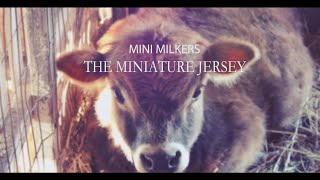 getlinkyoutube.com-Mini Milkers - The Miniature Jersey Cow