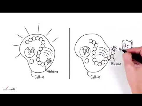 VACCIN A ARNm