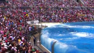 getlinkyoutube.com-Seaworld SHAMU Killer Whale Show