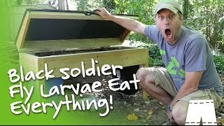 getlinkyoutube.com-How To Operate A DIY Black Soldier Fly Larvae Composter