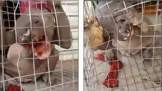 getlinkyoutube.com-Extraña Criatura Hallada En China (Análisis) | Evidencia X