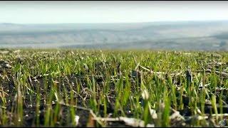 «Агрономика». Прогнозы на урожай-2016 (23.03.2016)