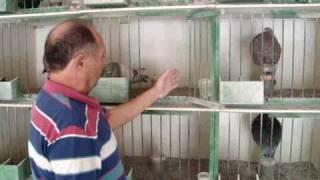 "getlinkyoutube.com-buchon gaditano-homenaje a mi amigo ""pepe el yesero"""