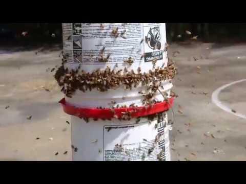 DIY Bee Yard Feeder with Gene Rene'