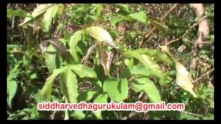 getlinkyoutube.com-miracle herbal research-kolli malai tour part-2