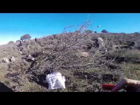 SURFERHUNTER-OJEO DE PERDICES EN TOMILLOSO DE LA UMBRIA-DEC 2013