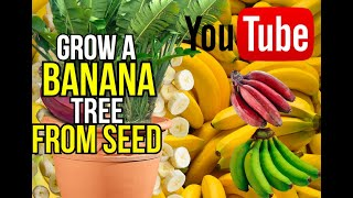getlinkyoutube.com-how to grow a banana tree from seed