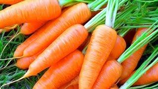 57.Морковь.Посадка моркови новым способом.