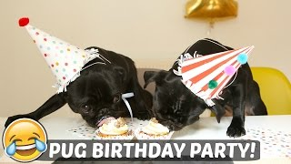 getlinkyoutube.com-PUG BIRTHDAY PARTY!
