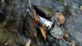 NIE MEHR HUNGERN! Fischfalle bauen ! | BushCraft: Tipps und Tricks !