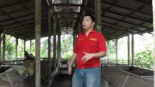 getlinkyoutube.com-Balayan Piggery