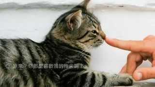 getlinkyoutube.com-想和貓咪說說話:那些貓咪不說你不會懂的73個祕密
