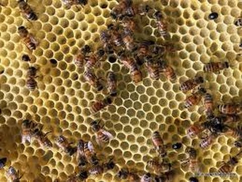 Tips for getting rid of Hive Beetles in the Bee Hive. Easy for Beekeeper and no chemicals