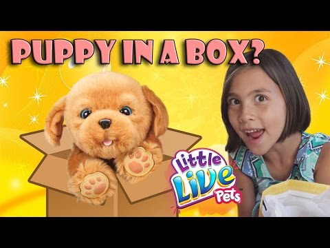 ANOTHER PUPPY IN A BOX???  Jillian gets Little Live Pets Snuggles!