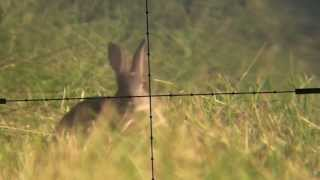Devon AirGunner June Air Rifle Rabbit Hunt Weihrauch HW100 Scopecam