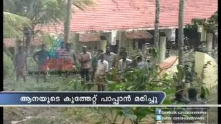 getlinkyoutube.com-Elephant goes wild, kills mahout at Thiruvananthapuram