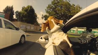 Driving Moose