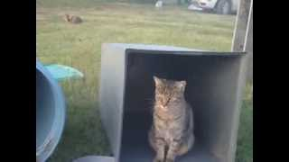 How To Make Houses For Ferral and Stray Cats.