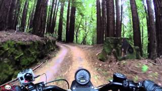 getlinkyoutube.com-Redwood Run #3 || Harley Street Bob and 1200 Sportster || Into The Woods...