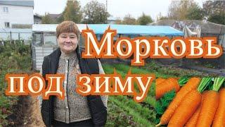 getlinkyoutube.com-Посадка моркови под зиму. Подготовка грядок. (4.10.16 г. )