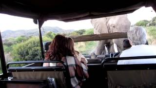 getlinkyoutube.com-Angry Elephant in Pilanesberg